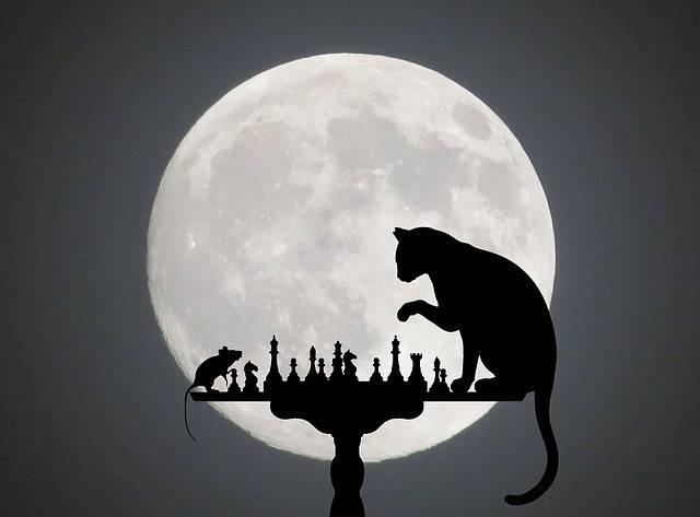 Das Katz- und Maus-Spiel